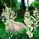 Beautiful white flowers by Shulie1