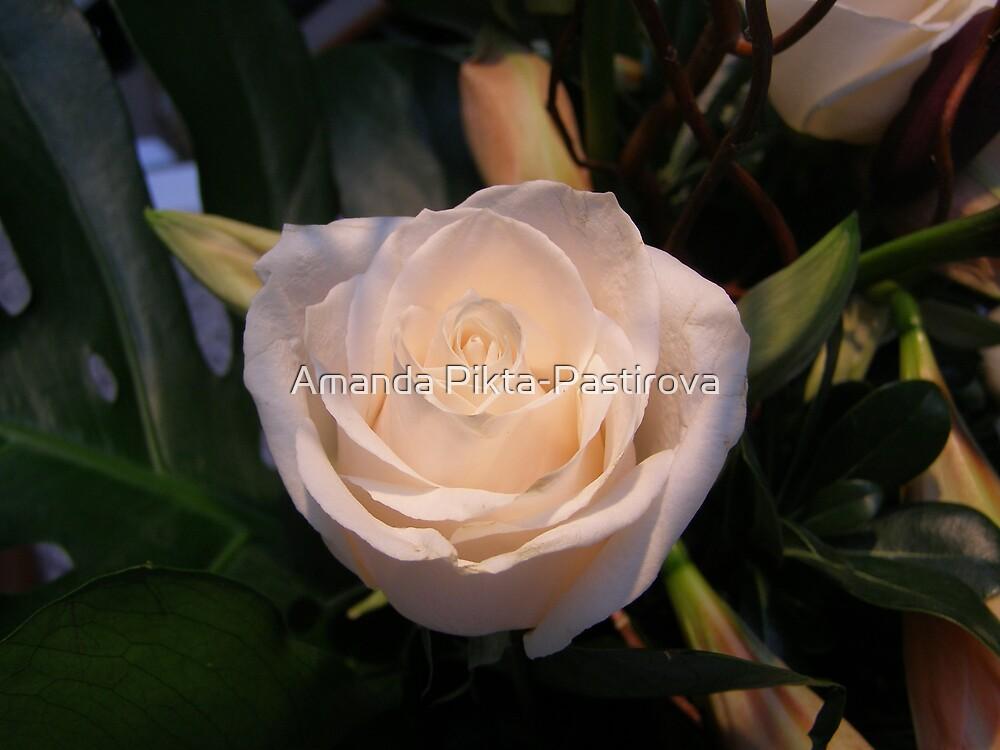Restful Rose by Amanda Pikta-Pastirova