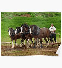 Clydesdale Team, Farm World, Warragul Poster