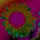 UniQue Sunflower by tachamot