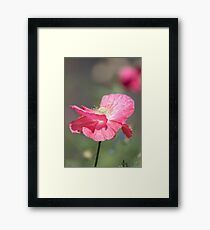 Shirley Poppy 2017-1 Framed Print