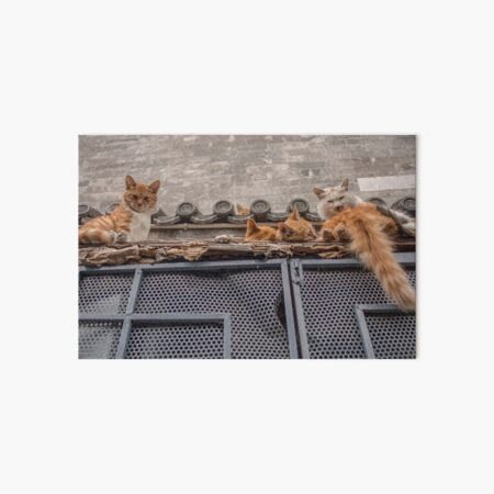 A bunch of cats keep herself warm Art Board Print