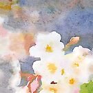 White Cherry Blossoms Digital Watercolor Painting 3 by Beverly Claire Kaiya