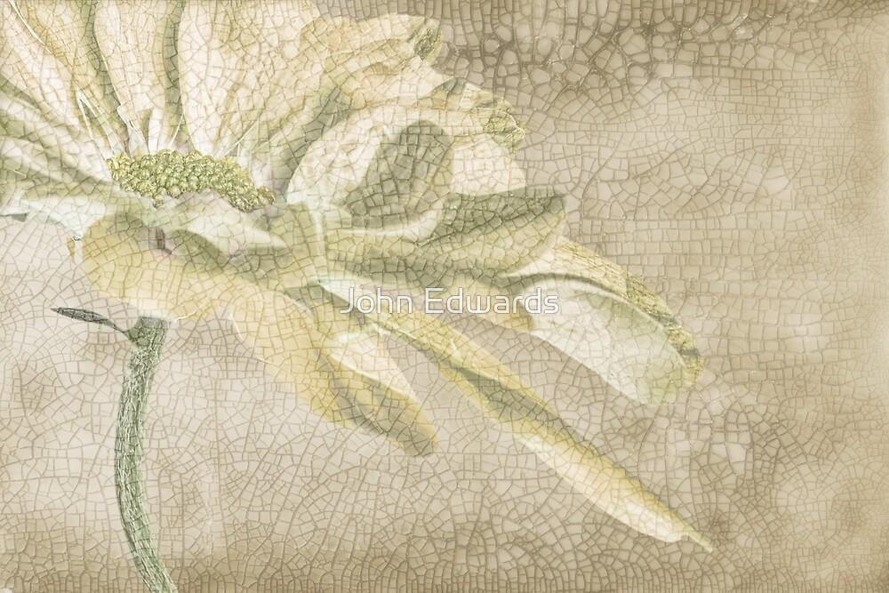 Shades of Magnolia by John Edwards