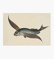 Vintage Flying Fish Photographic Print