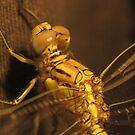 Gold Dragonfly by Toni Kane