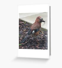 Jay nest building Greeting Card