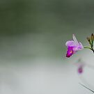 Pink Flower by the Side of the Lake by Christian Eccleston