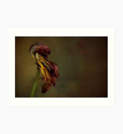Faded Beauty of the Flower Art Print
