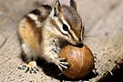 The Nut Ball by Betsy  Seeton