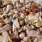 Shell Secrets by Bronwyn Houston