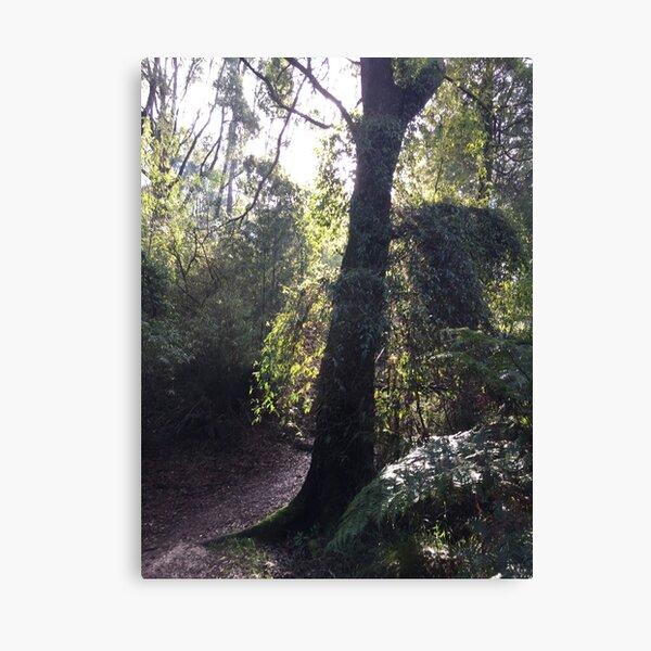 Forest Corner Canvas Print