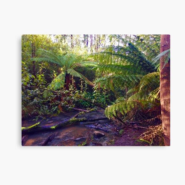 Lyrebird Forest Walk Canvas Print