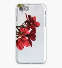 Red flowers with buds in foliage against sunlight iPhone Case/Skin