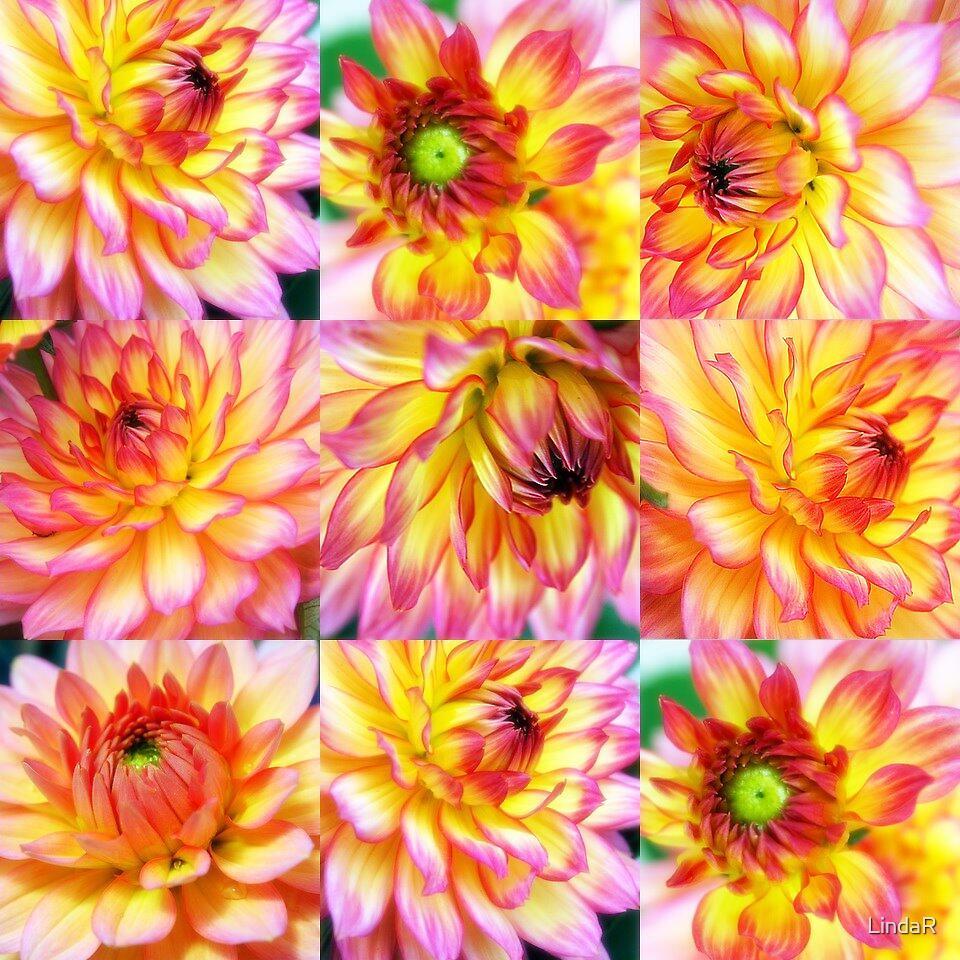 Dahlia Collage... by LindaR
