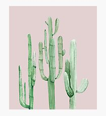 Pretty Cactus Pink and Green Desert Cacti Wall Art Photographic Print