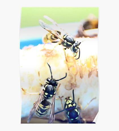 Feeding wasps Poster