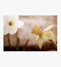 If These Flowers Could Speak Photographic Print