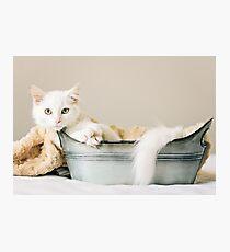 Griffin - Animal Rescue Portraits Photographic Print