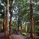 Aboriginal Lean To by Peter Evans