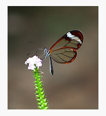 Elegance from nature Photographic Print