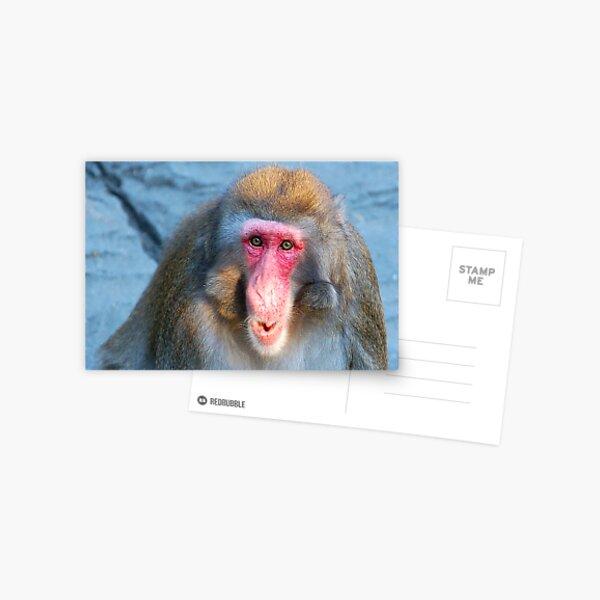 Primate Postcard