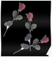 Rose Preserved Poster