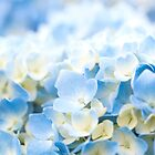 Blue Hydrangeas by Candypop