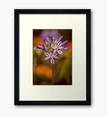 The Calycanthus ran off leaving the Agapanthus to fend for herself. Framed Print