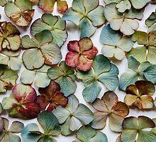 Hydrangea Petals no. 2 by Bethany Helzer