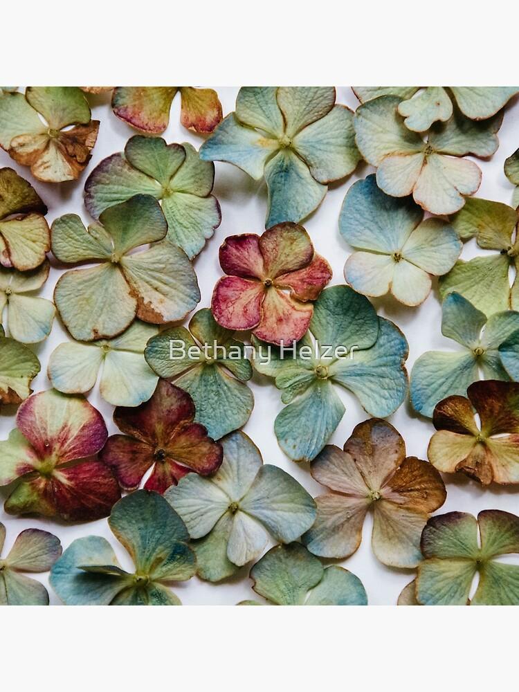 Hydrangea Petals no. 2 by riotjane