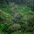 «Terraza de arroz de Bali» de Alita  Ong
