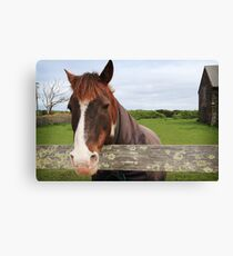 Horse with it's blanket Canvas Print