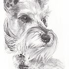 mini-schnauzer drawing by Mike Theuer