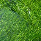 Moss of Green by lindsycarranza