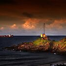 The Point Light Swimmers by Peter Evans