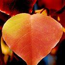 Autumn Leaf by Bouzov