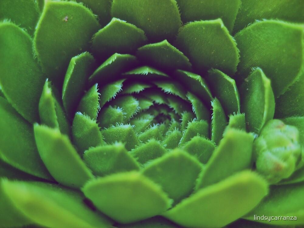 Green Succulent by lindsycarranza