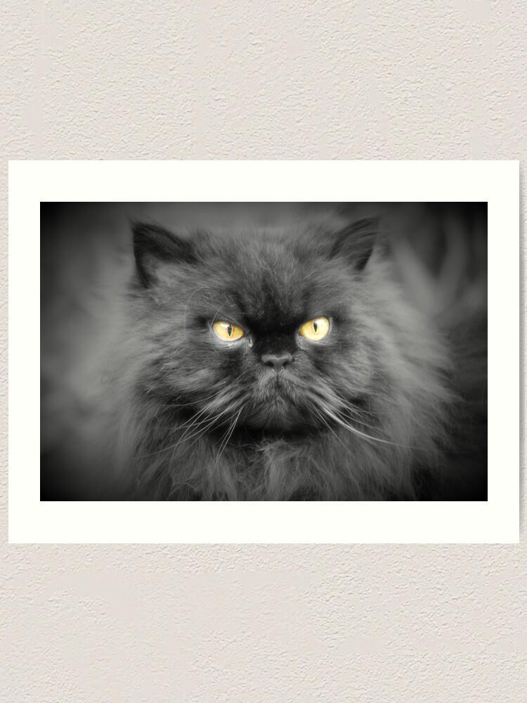 Alternate view of Persian cat Art Print