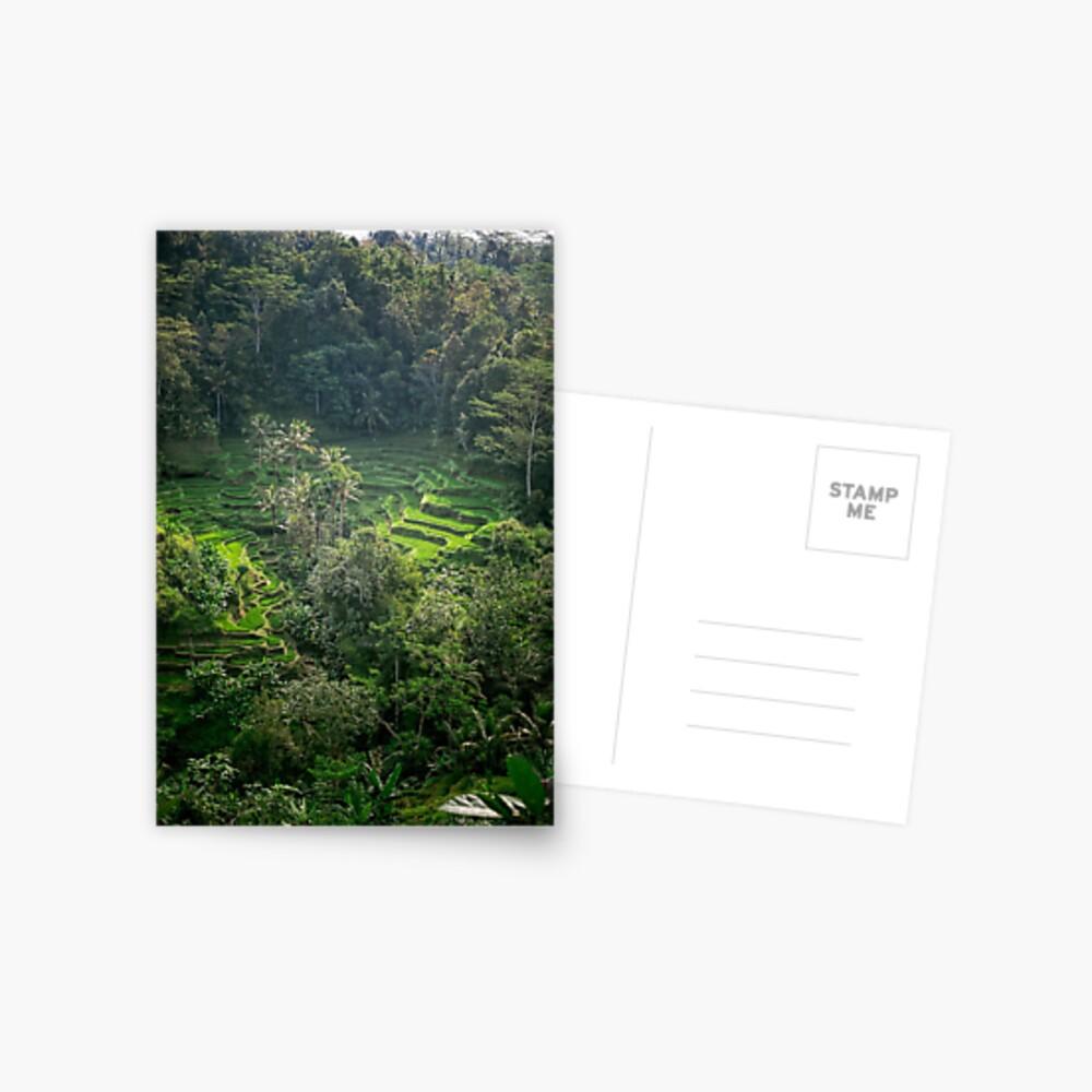 Terraza de arroz de Bali Postal