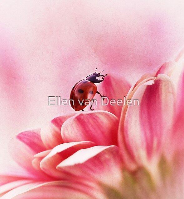 Ladybird on Gerbera by Ellen van Deelen