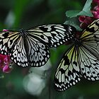 Two Black & White Butterflies by Mike Ashley