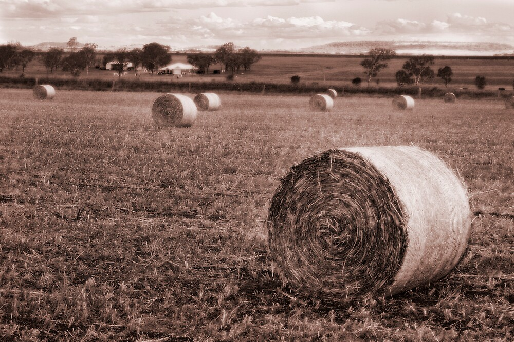 Farmland by Emma Jones