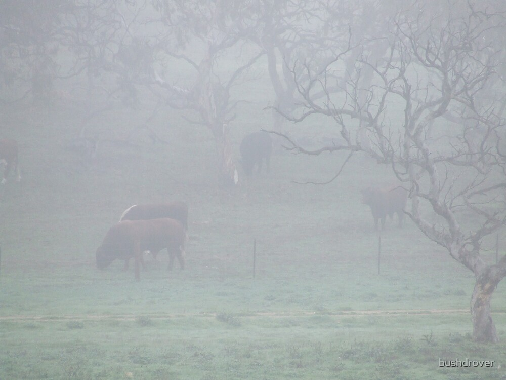 Cattle in The Mist by bushdrover