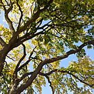 Branches of a Tree by lindsycarranza