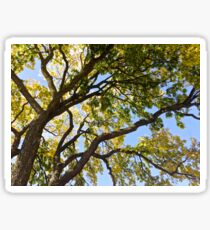 Branches of a Tree Sticker