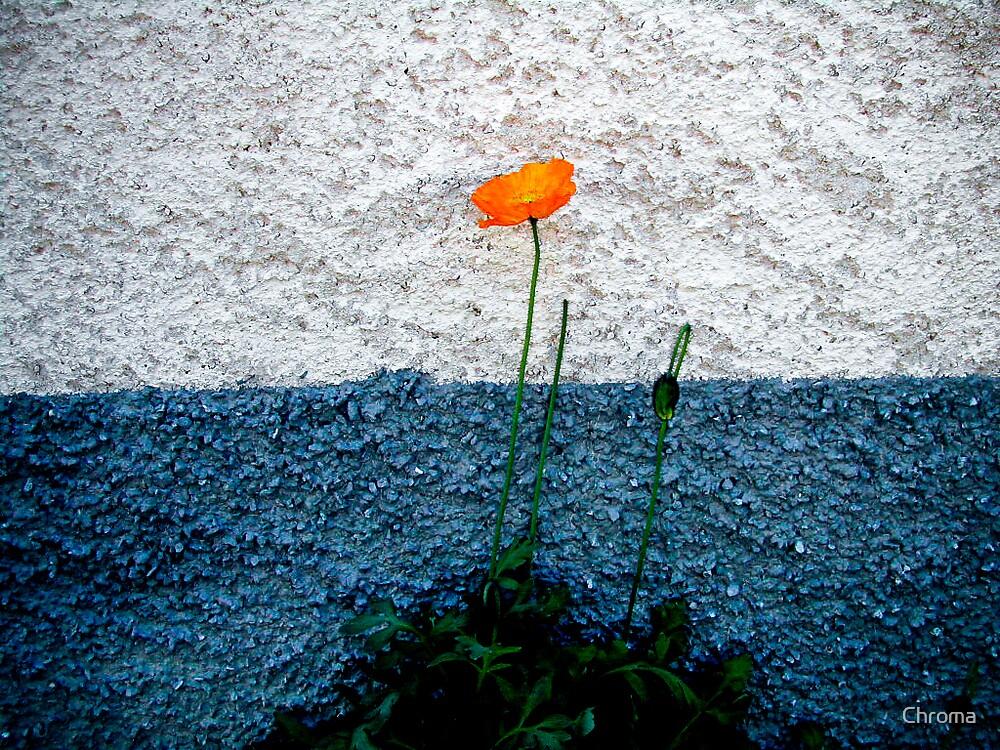 Alpine flower by Chroma