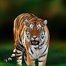 Tiger on Green by BluedarkArt