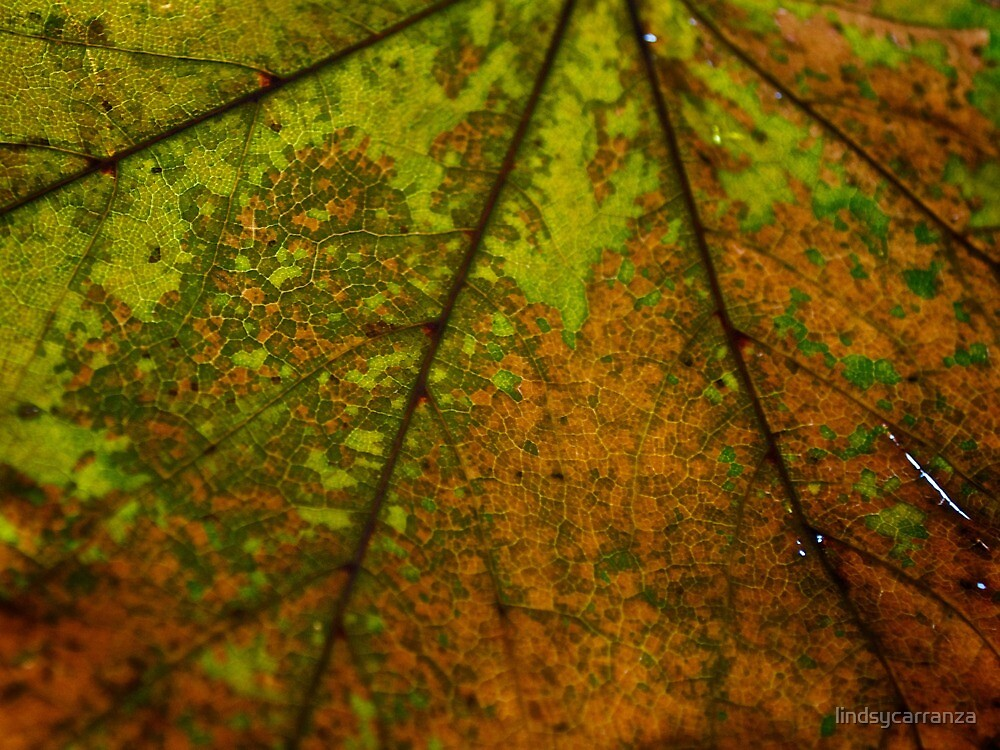 Texture Like Nature's Pixels by lindsycarranza