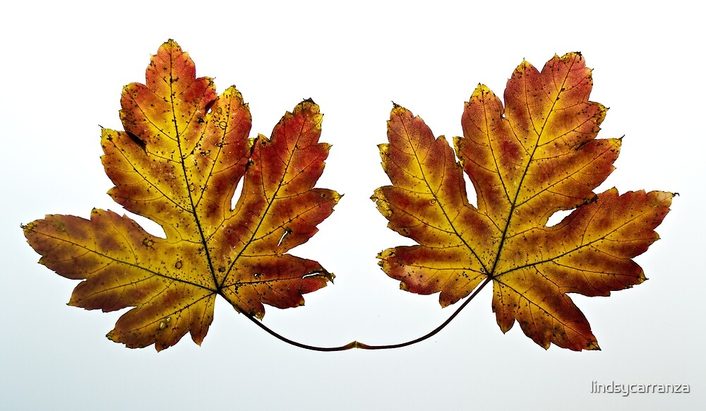 Two Leaves by lindsycarranza